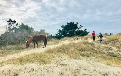 The Wild Ponies of Shackleford Island