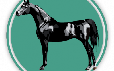 Horse & Pony Breeds Quiz