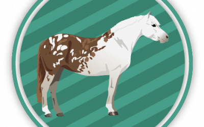 Horse Coat Colors Quiz