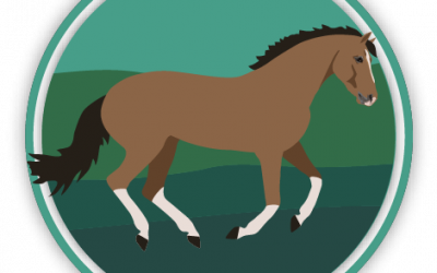 Horse Gaits & Movement Quiz