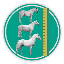 Measure horses icon