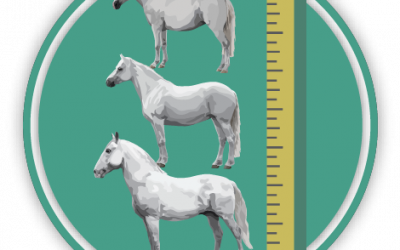 Measuring Horses Quiz