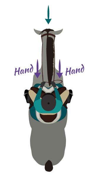 Both Hands Reins aid