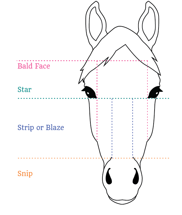 horse Face Markings guide
